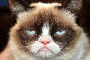 Grumpy-Cat-14